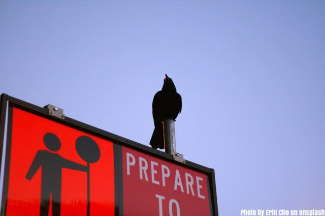 Stop signal with a blackbird upon